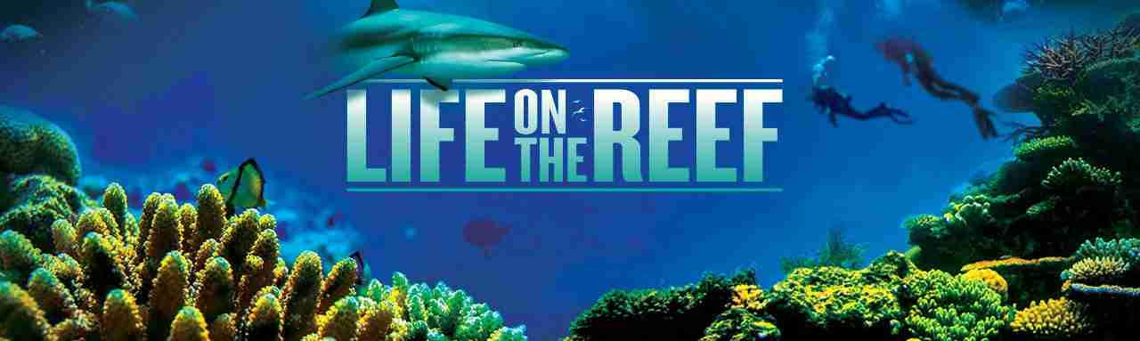 "<span class=""dash_title_first"">Life on the Reef</span>"